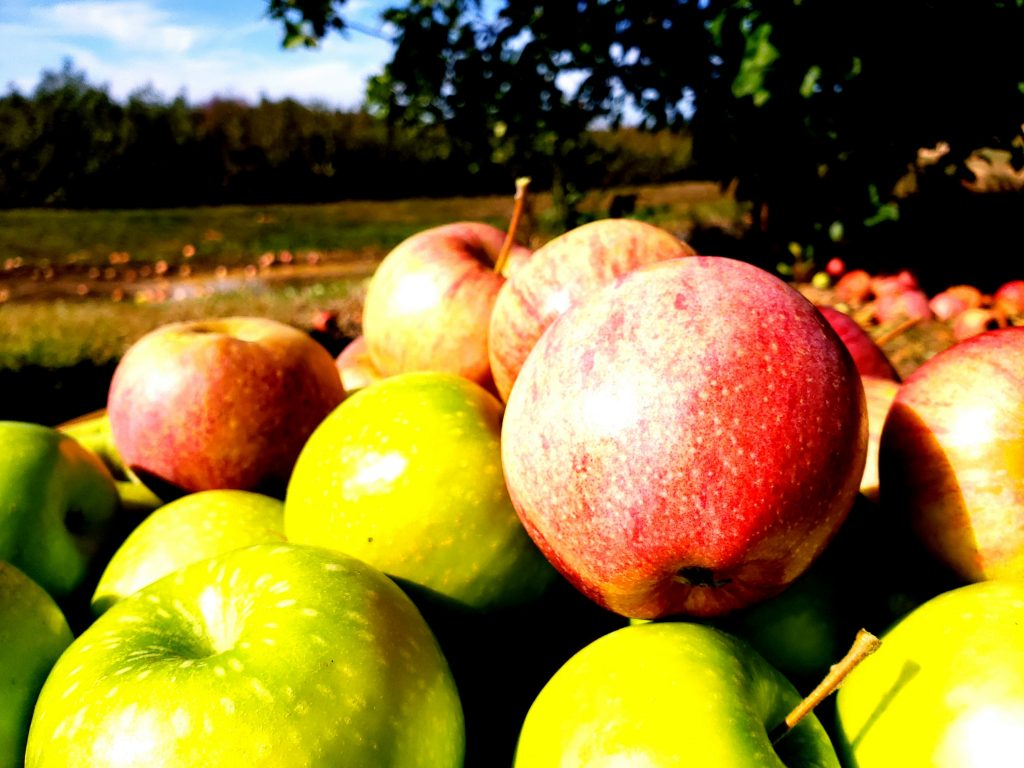 Le Pommier Apples