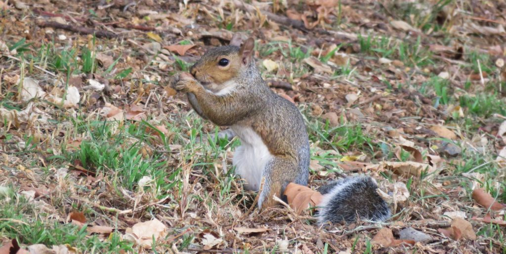 We adore all our squirrels